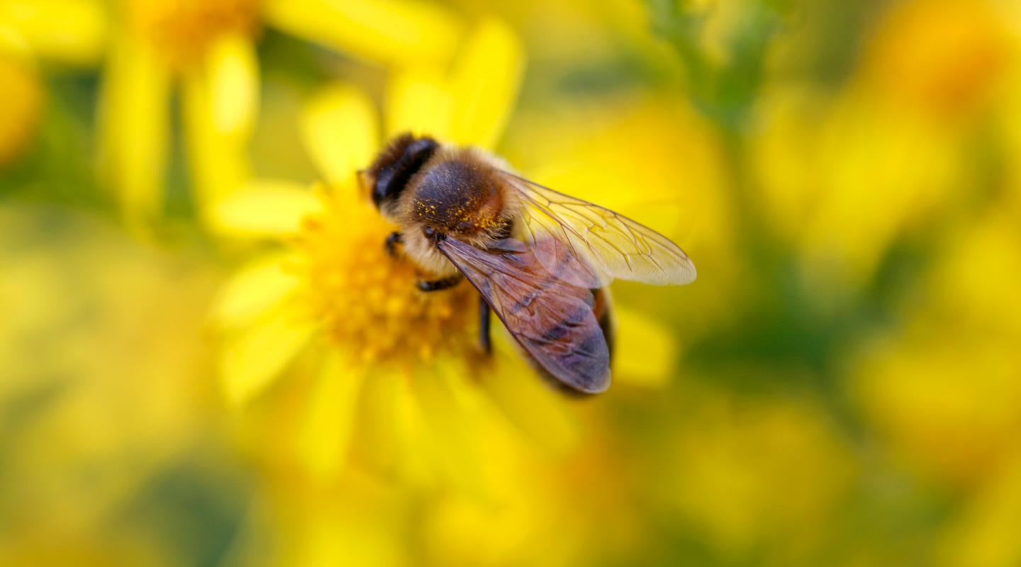 Top 10 facts about bees