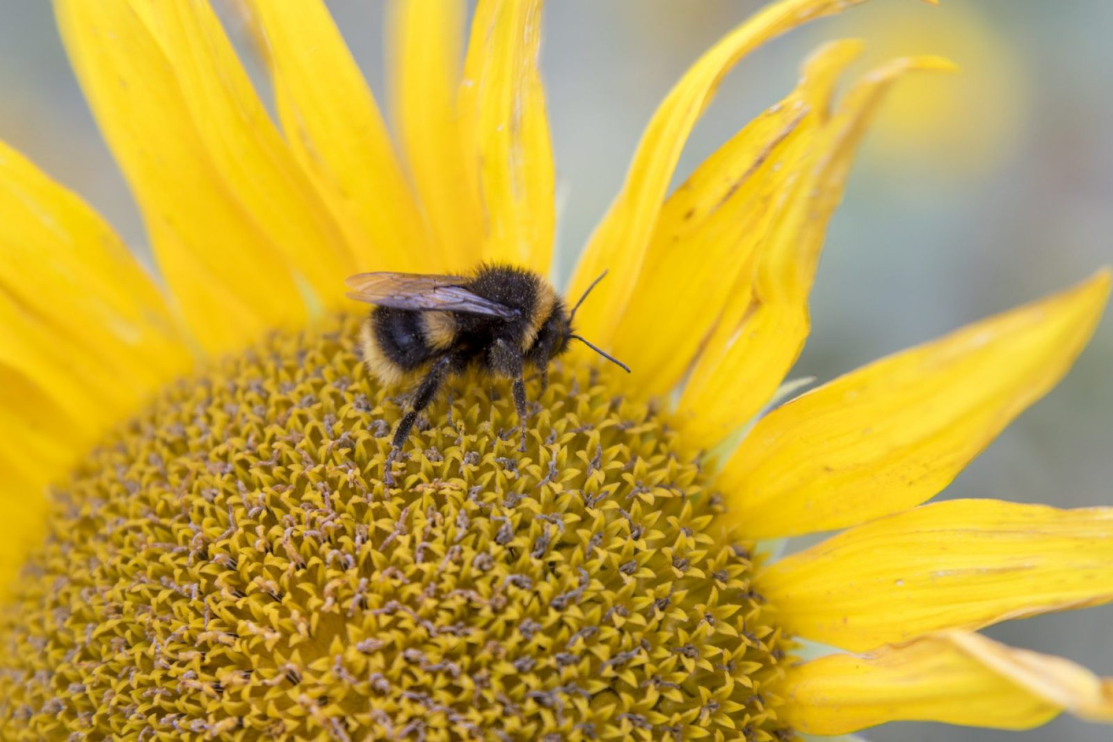 World Bee Day: five projects making a difference to bees this year