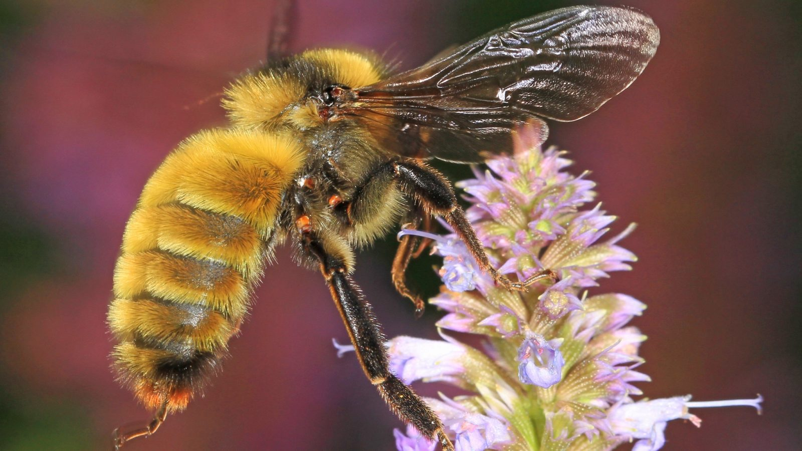 It's World Bee Day: Let's Hear It For Our Native Bees