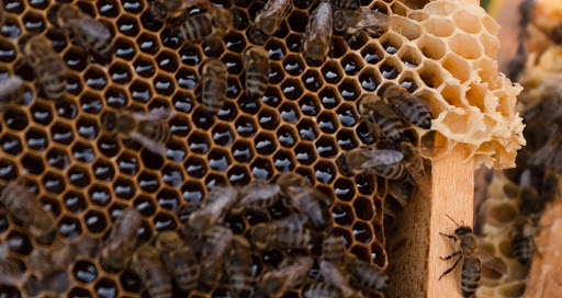 Albania's Bee-Keepers Buzzing Over Anticipated Best Year Ever