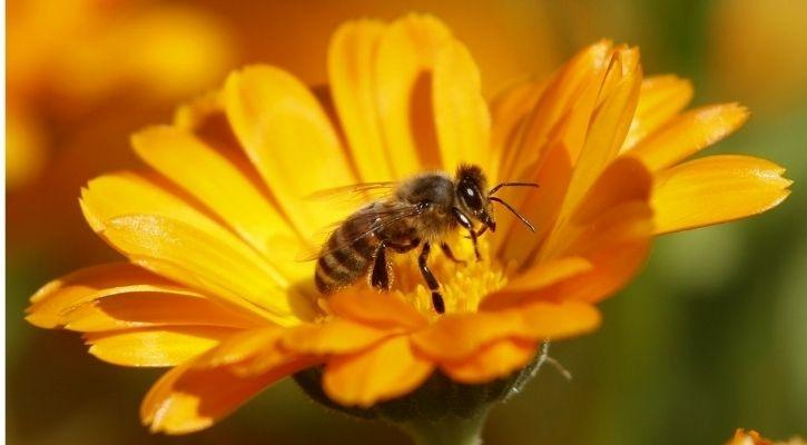 Bee Population And Honey Production Increased During COVID-19 Lockdown