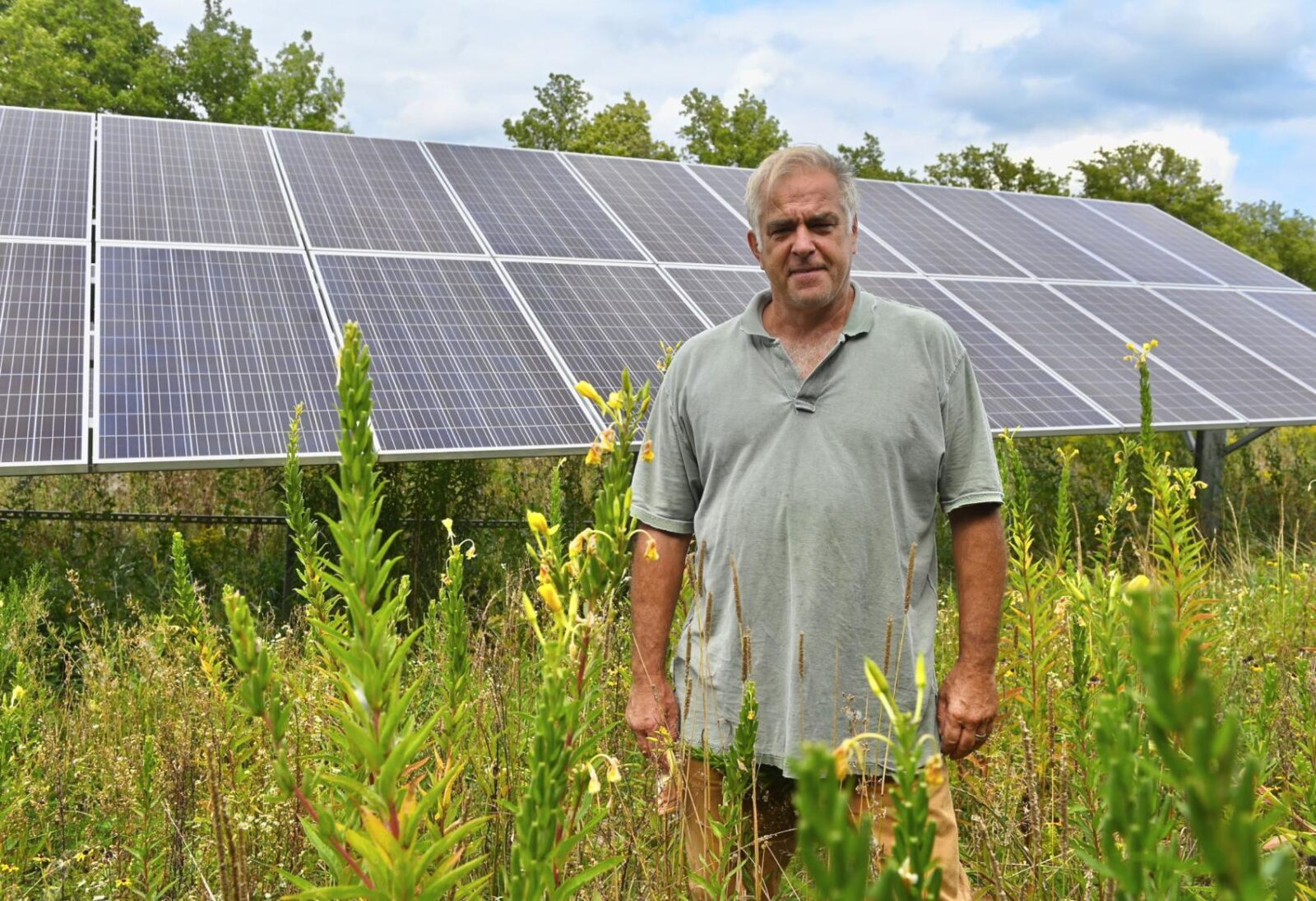 Bee friendly: Solar firms look to help pollinators