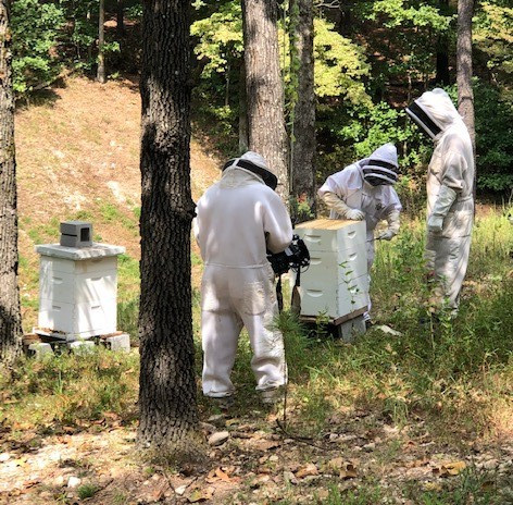 Take This Job and Love It: Bee Keeping