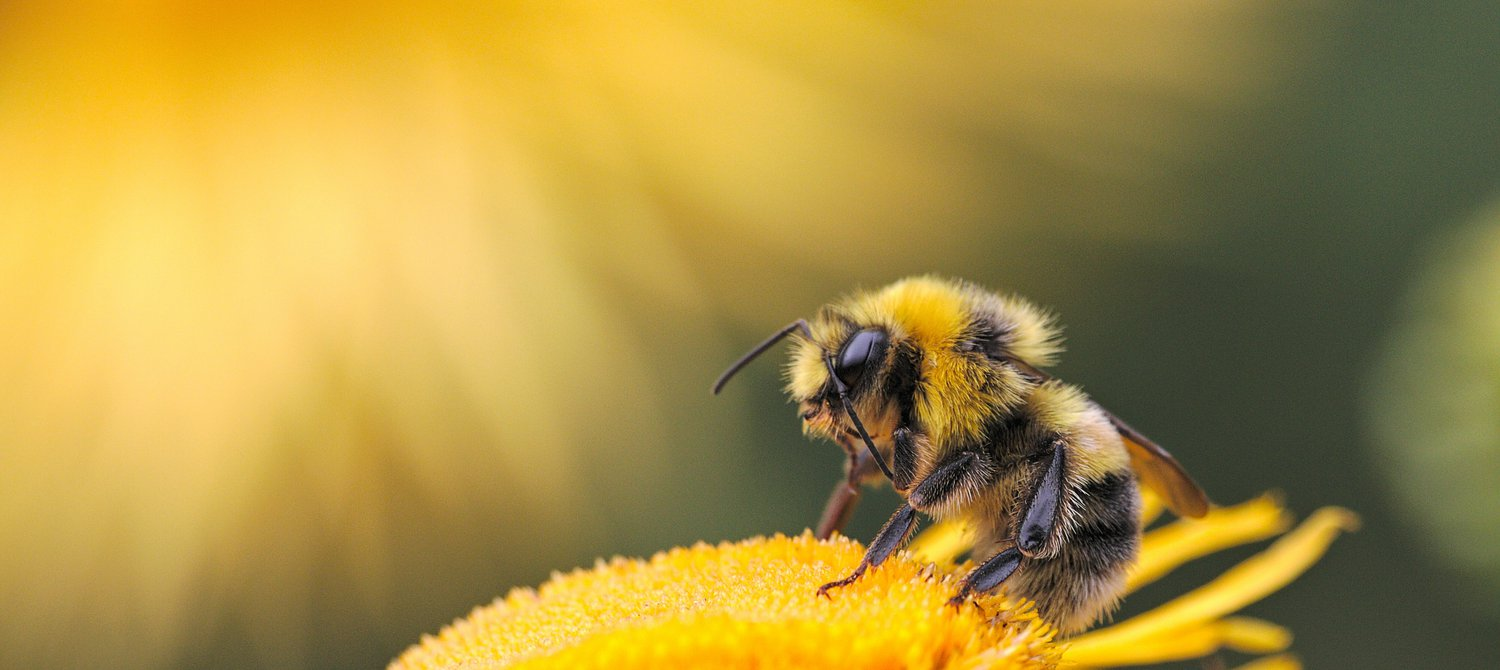 New Zealanders Urged to 'Bee a Hero' This September for Bee Aware Month