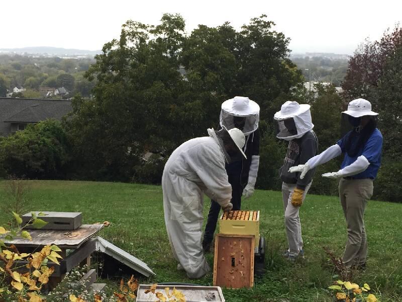 McCallie School beekeepers see themselves as protectors of the bees