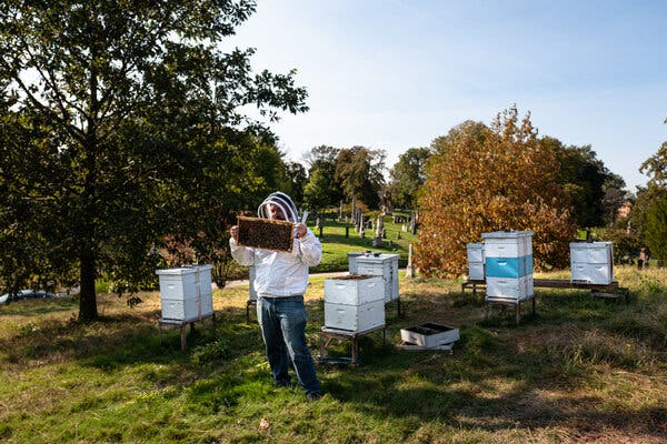 How an Urban Beekeeper Spends His Sundays