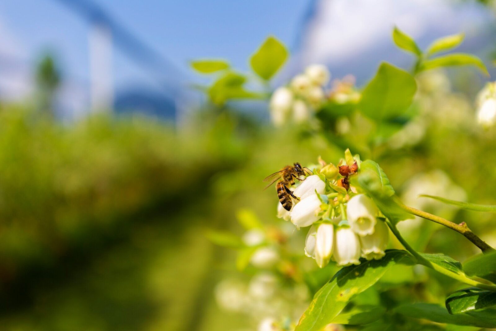 A Gardener's Guide to Identifying the Most Common Types of Bees
