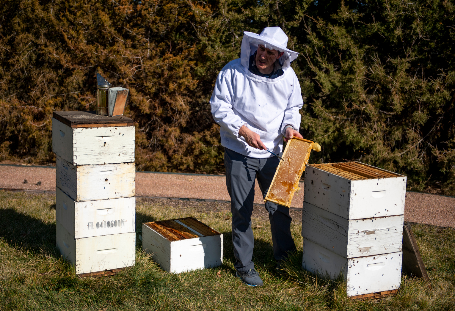 Greeley honey company buzzing for US bees and beekeepers