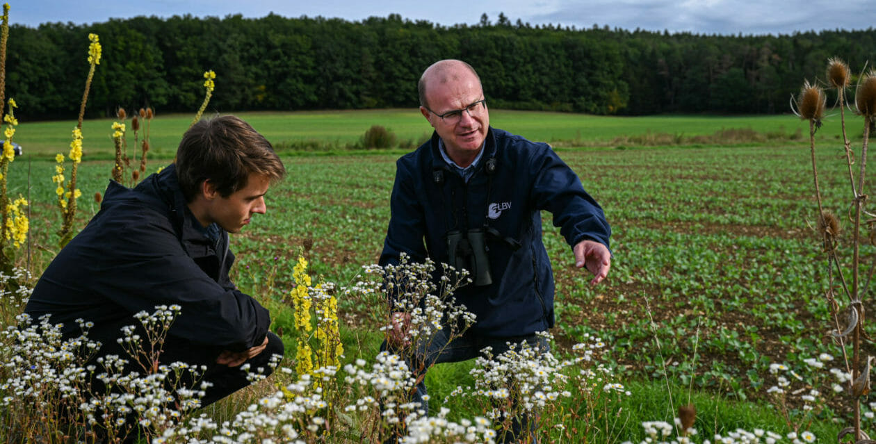 A grassroots push to save vanishing birds and bees forces change on Germany's farms