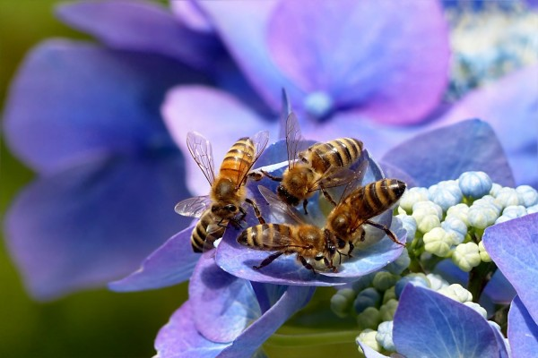 Surprising Similarity Between Honey Bee and Human Interaction Unveiled