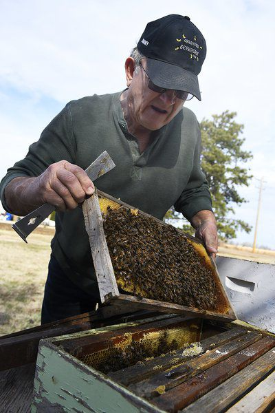 Spring offers fresh opportunities to support area bee population