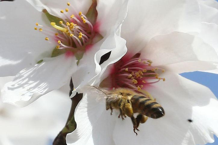 Apiary industry issues tips for taking sting out of bee theft