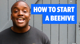 Bee Happy: How to start a beehive at home