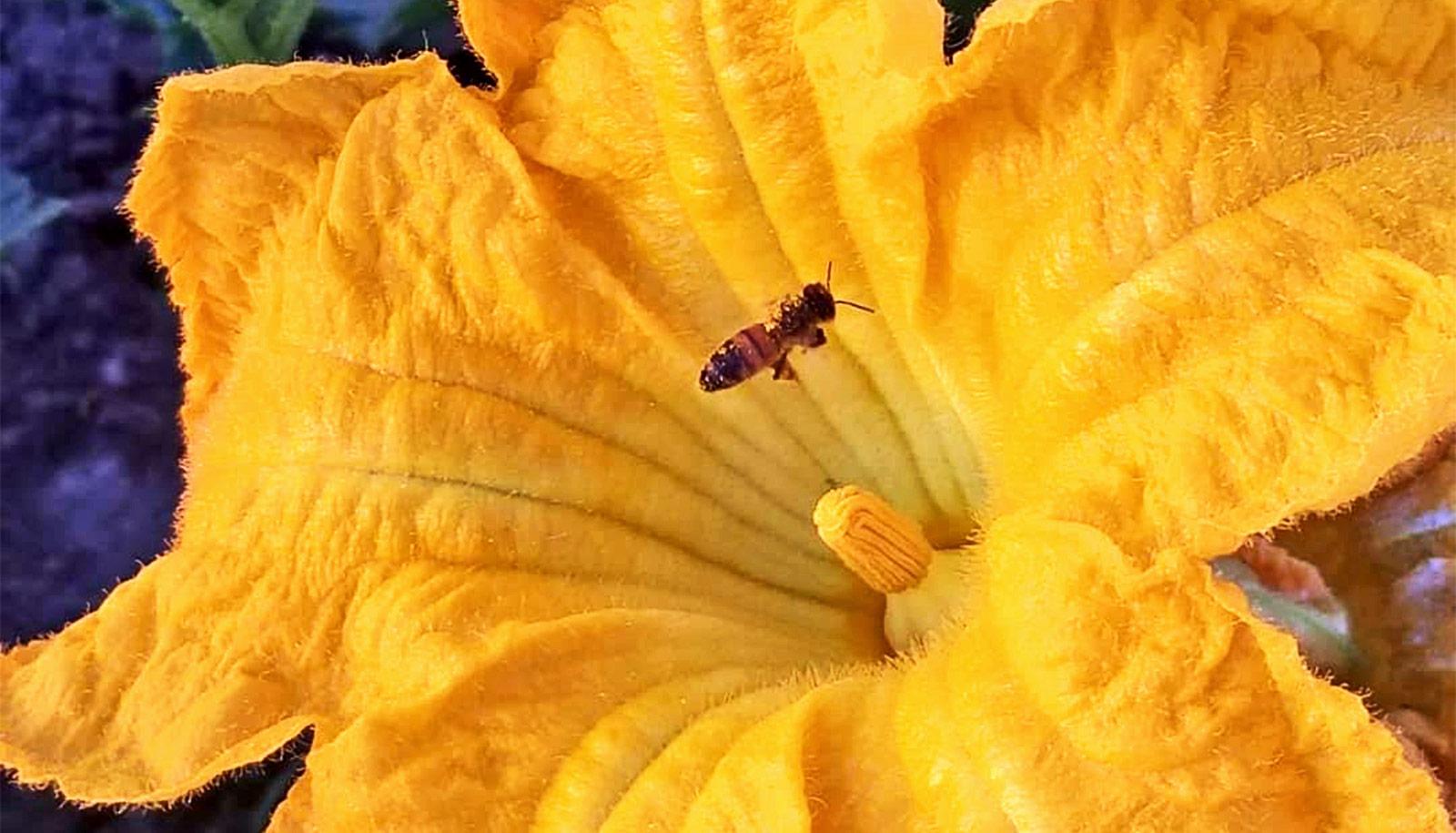 Bee diversity keeps colonies healthy