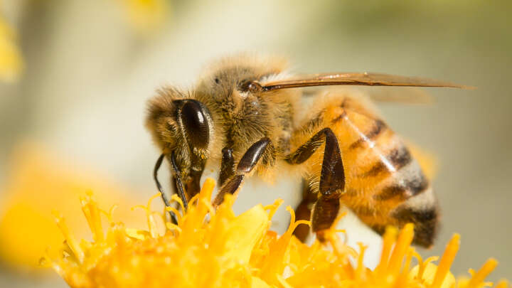Turns Out Bees Were Cheating When They Convinced Us They Could Do Math