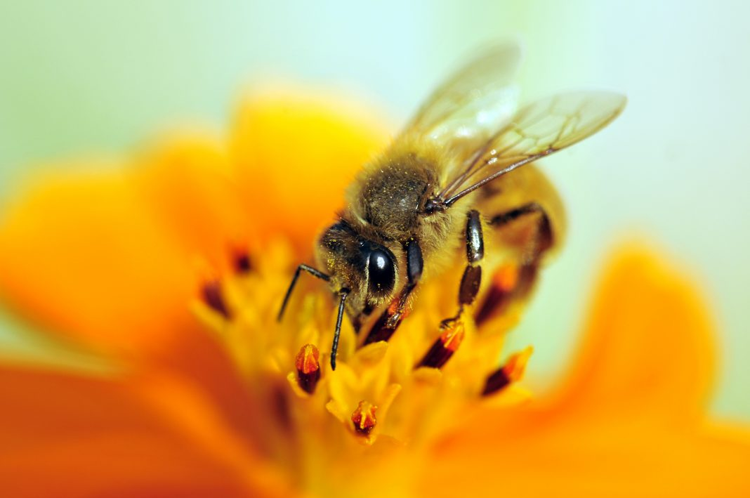 Scientists explain why plant diversity is crucial for bee conservation