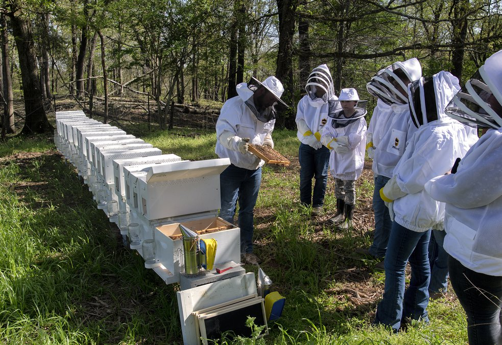 Why Hall County Schools now has active honey bee hives