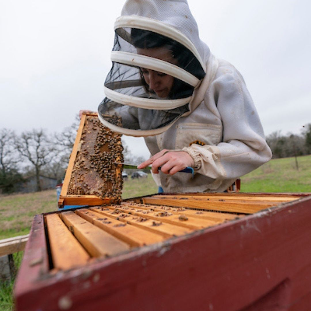 Looking to take the sting out of beekeeping?