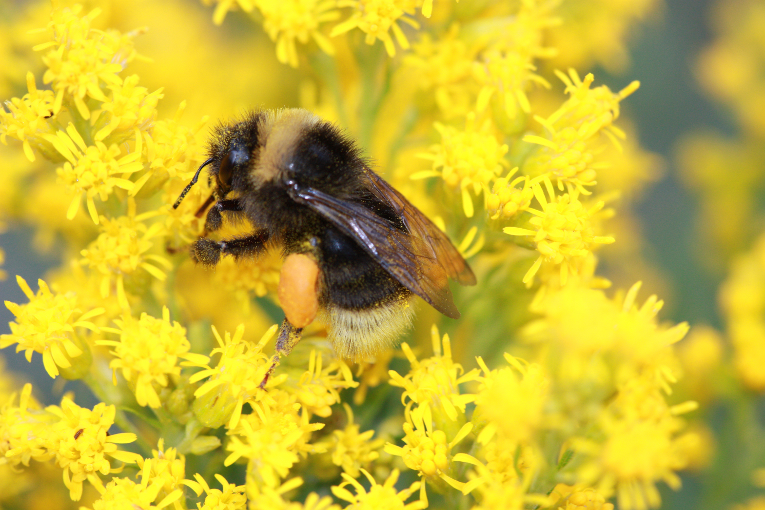 California Gardening: Try growing plants that bees will love