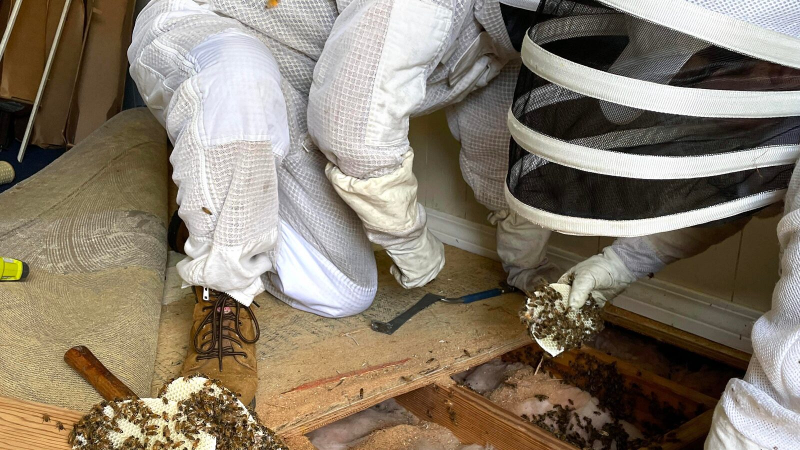 Steve's Beez: Saving honey bees one hive at a time in Okaloosa, Walton County