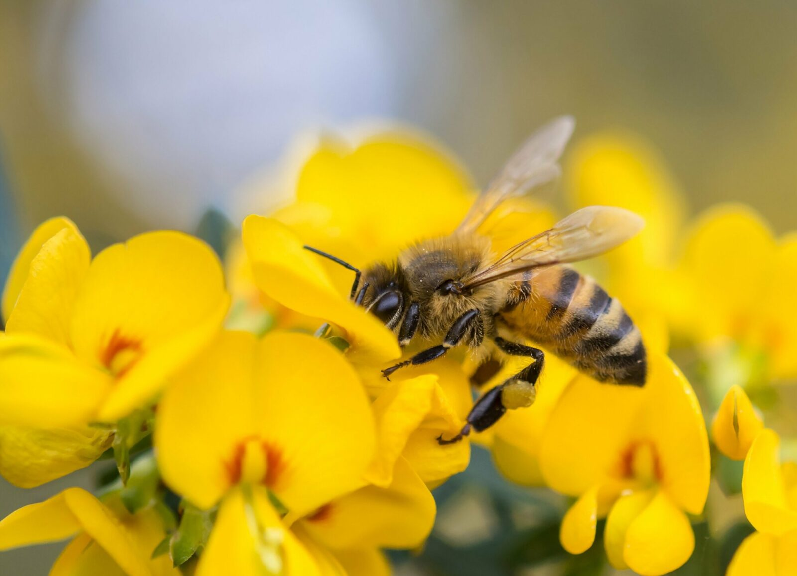 Virginia city is now officially a 'Bee City'