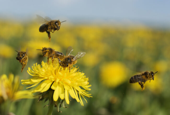 10 Types of Bees All Homeowners Should Know