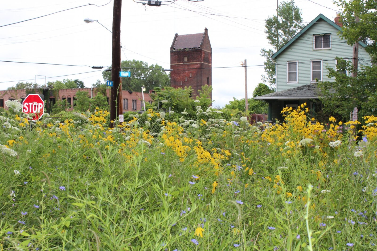 City-living bees benefit most from specific types of urban 'greening'