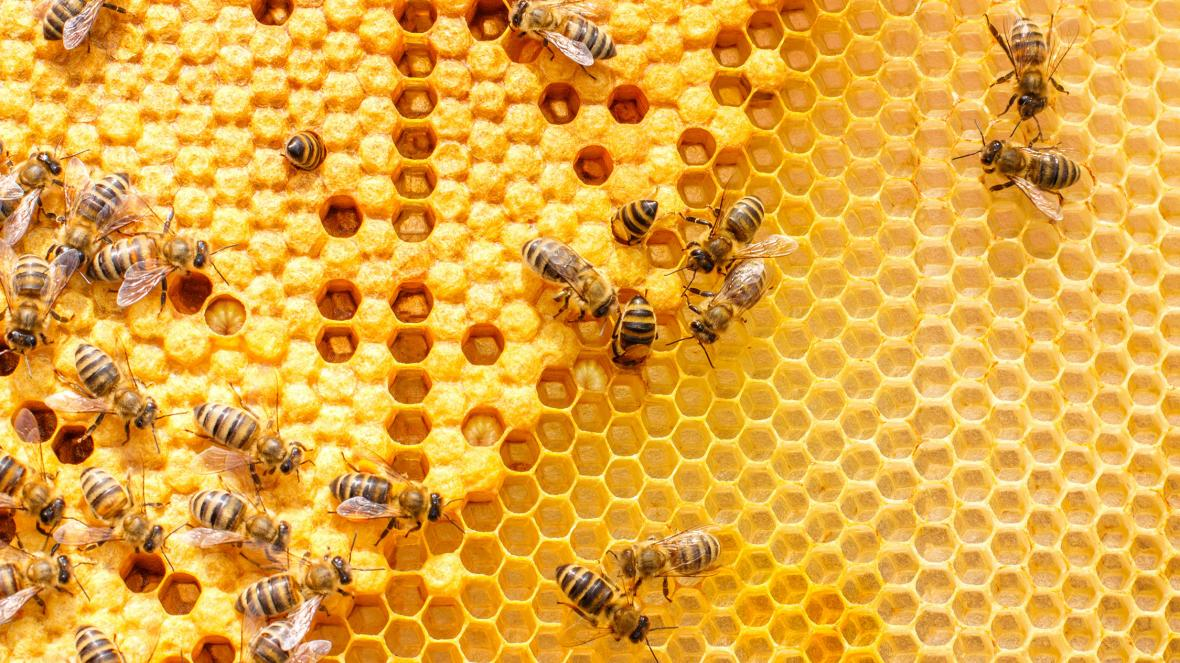 Meet the man battling to save the world's bees