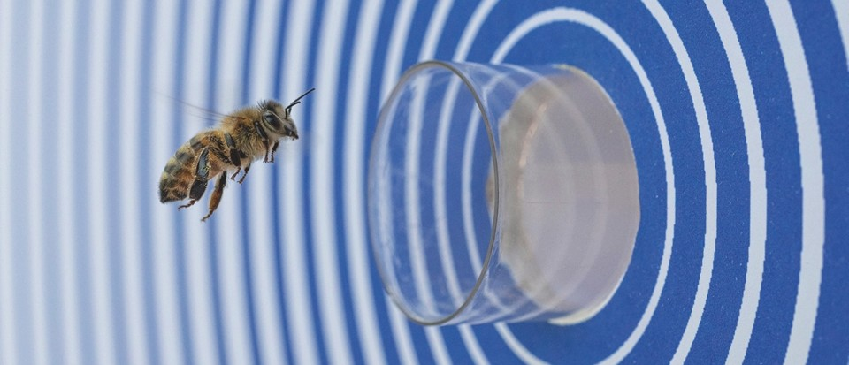 Bee scaffolding and bio heaters: New research reveals hidden beehive behaviours